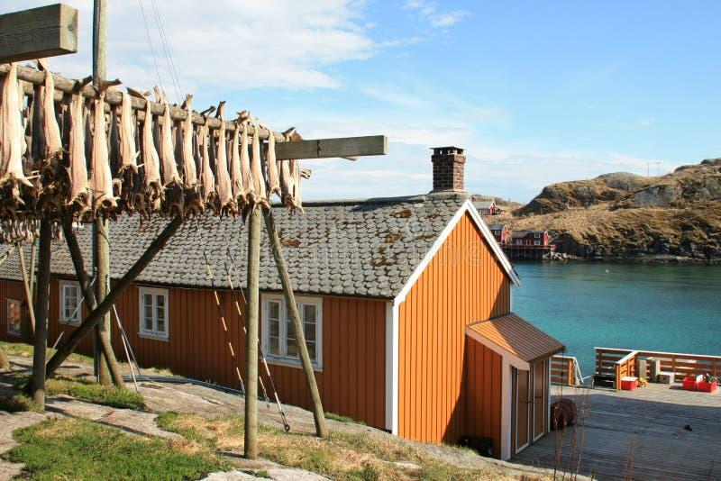 Sakrisoy's rorbu, and stockfish royalty free stock photos