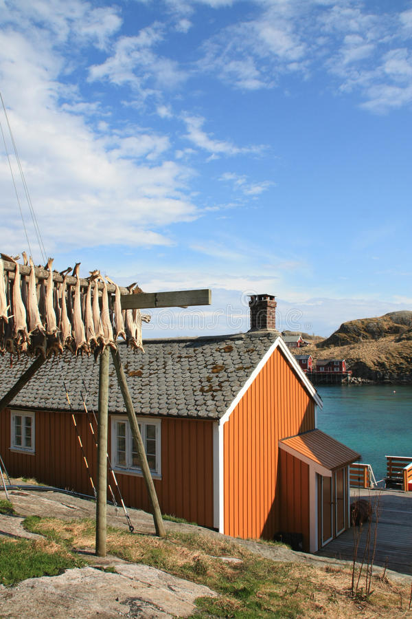 Sakrisoy's rorbu, and stockfish vertical royalty free stock photos