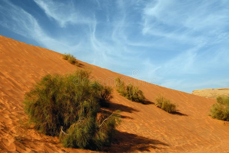 Sky sand saksaul royalty free stock photography