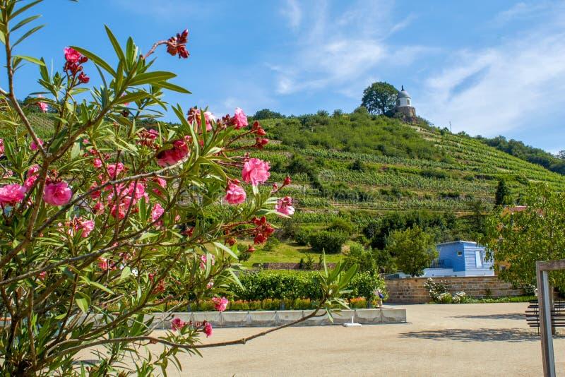 Saksische wijngaard die historische Pavillon 'Jakobstein overzien royalty-vrije stock afbeelding