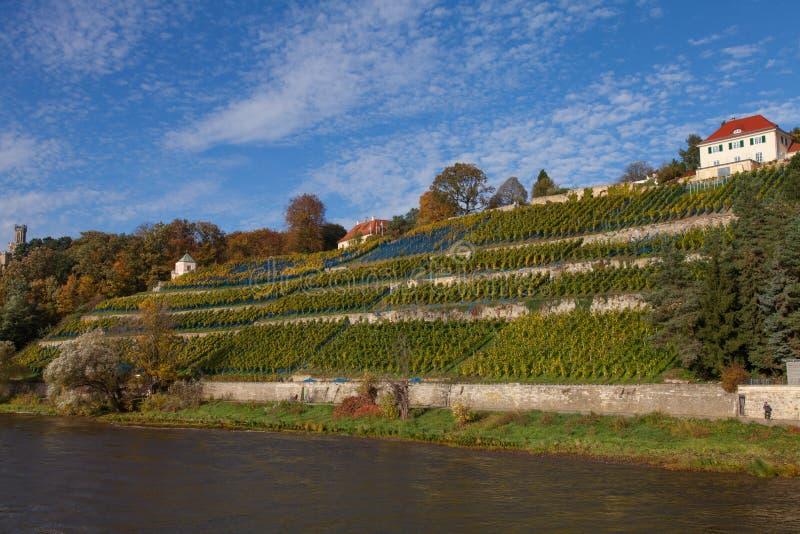 Saksische Wijnroute op Elbe royalty-vrije stock afbeelding