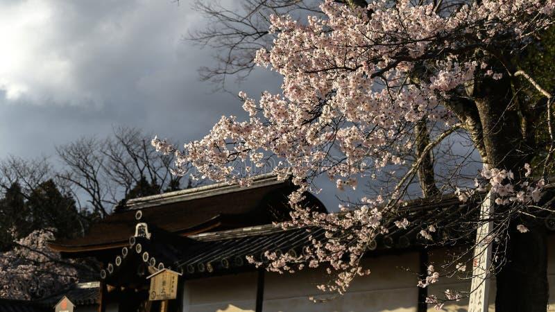 Sakura à Kyoto, Japon photographie stock libre de droits