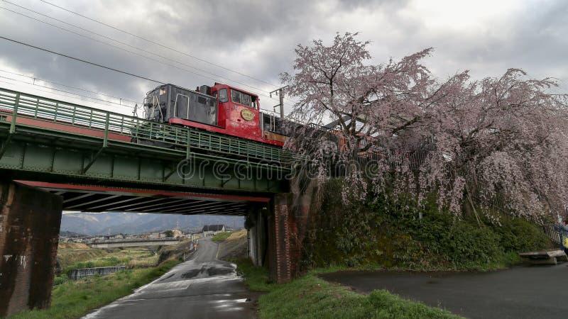 Sakura à Kyoto, Japon image stock