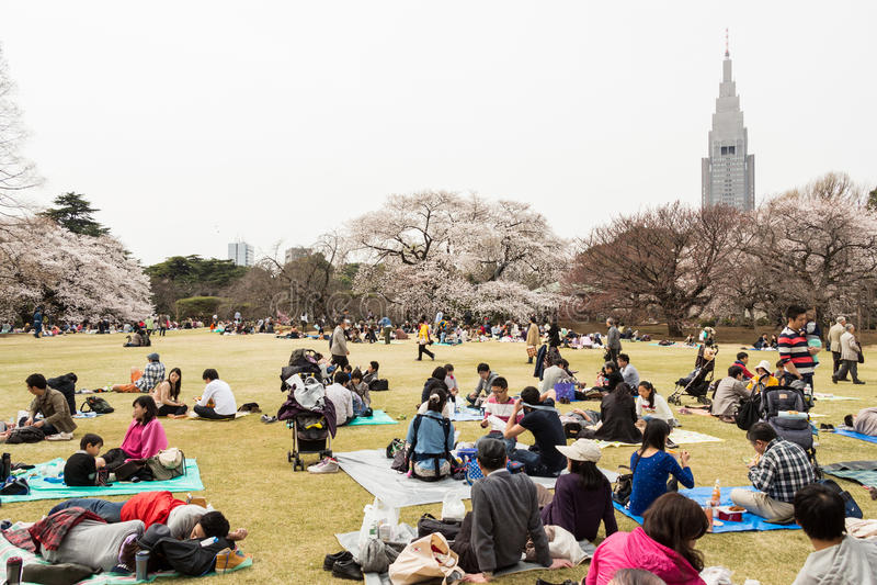 Sakura à Tokyo, Japon images libres de droits