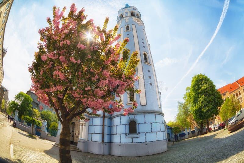 Sakura ανθών κερασιών κοντά στην ιερή εκκλησία της Elizabeth ` s στοκ φωτογραφίες με δικαίωμα ελεύθερης χρήσης