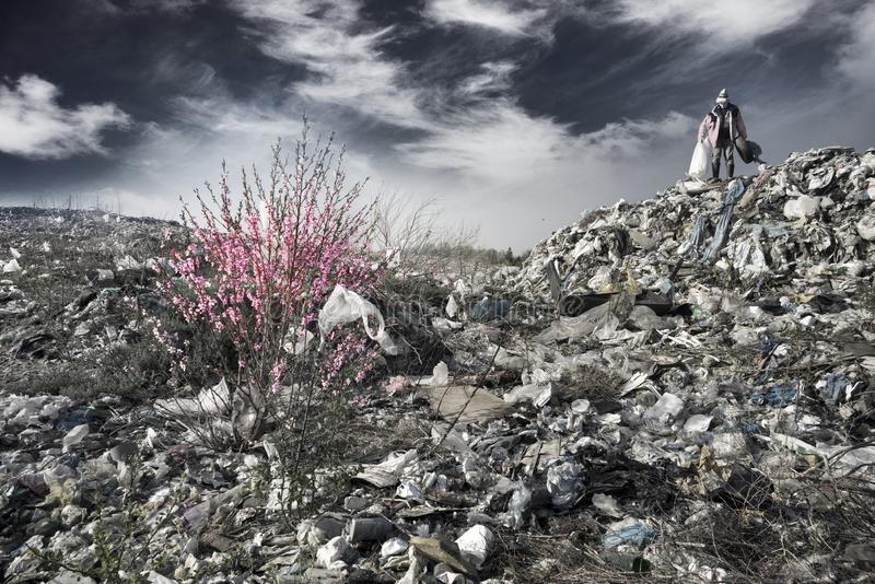 Sakura και το άτομο οδοκαθαριστών στοκ φωτογραφίες