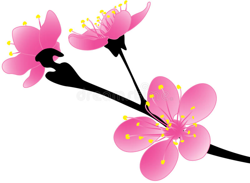 Sakura ilustração stock