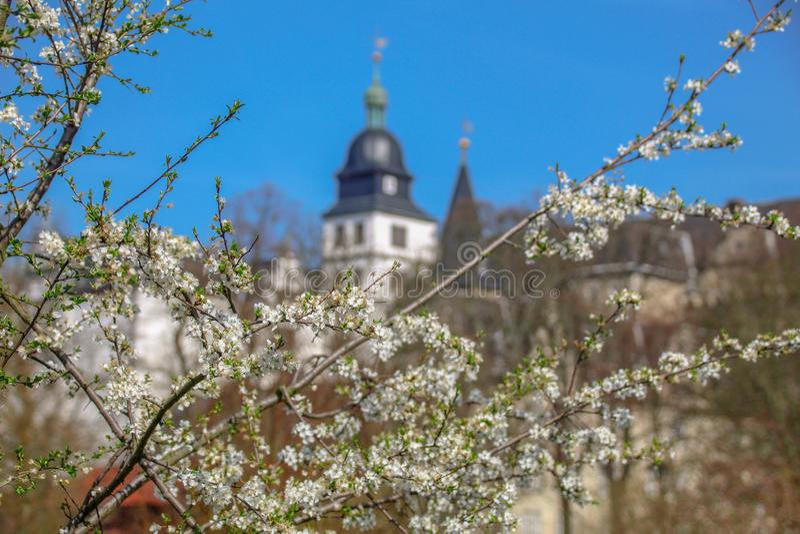 Sakura against the backdrop of Wolfsburg castle. Germany stock photo