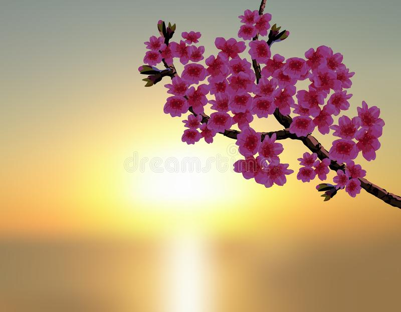 Sakura in the background of a beautiful sunset. A lush curved branch of a blossoming cherry tree with purple flowers and vector illustration