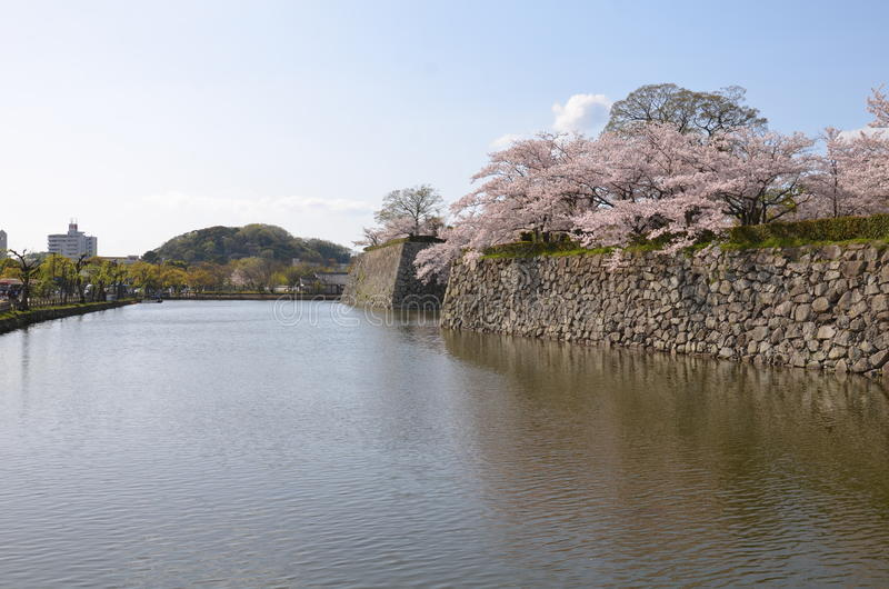 Sakura bij het Park van Himeji royalty-vrije stock foto's