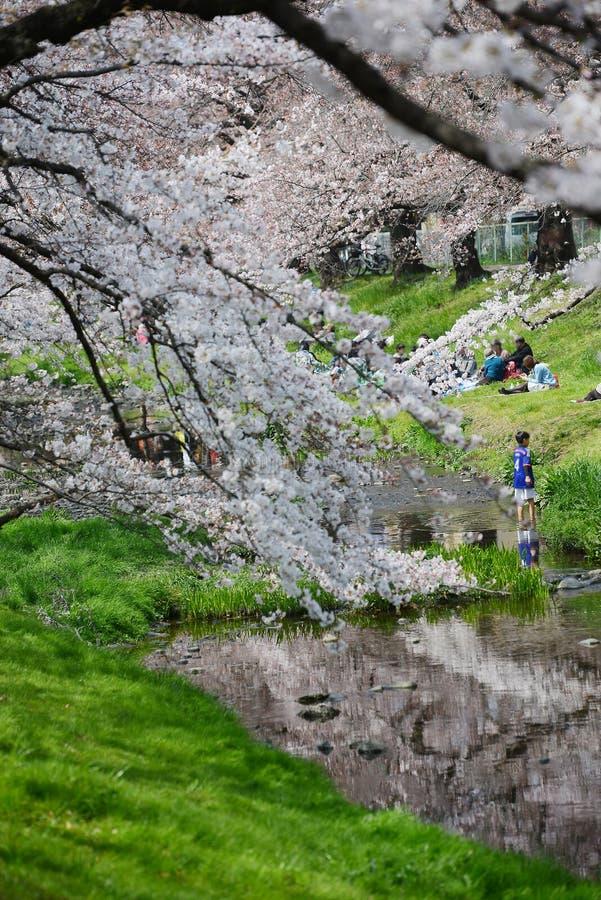 sakura blisko Tokyo zdjęcie stock