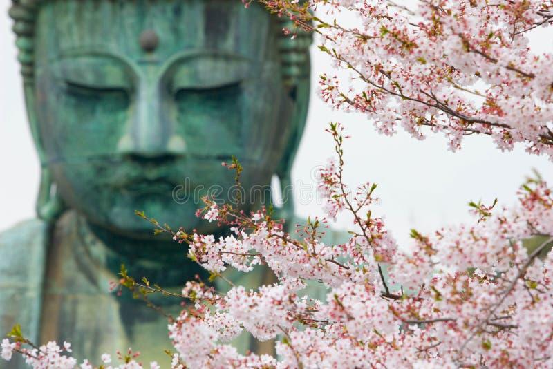 Sakura blommar körsbärsröda blomningar royaltyfri fotografi