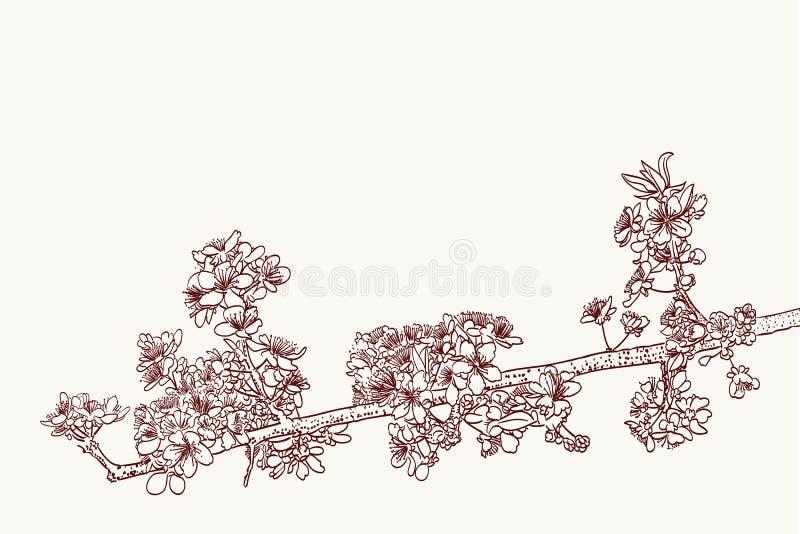Sakura blommor royaltyfri illustrationer