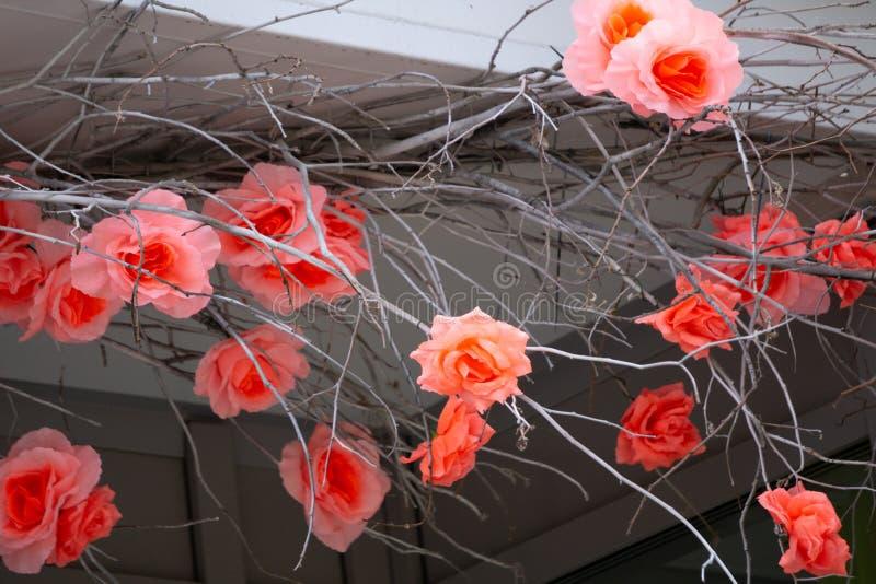 Sakura blommor som isoleras på vit blomma bakgrund som isoleras på vit bakgrund fotografering för bildbyråer