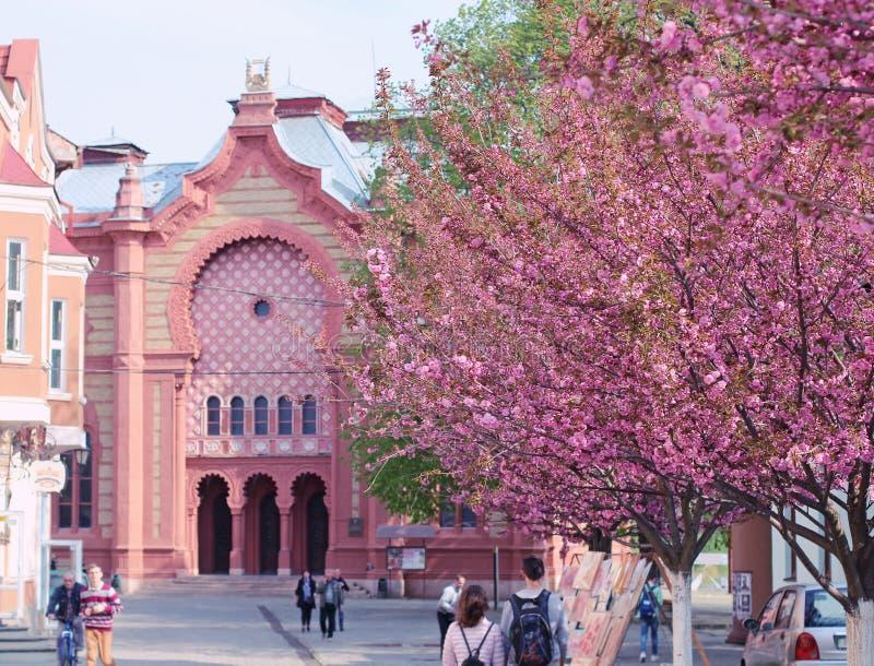 Sakura blomning i Uzhgorod, Ukraina royaltyfri bild