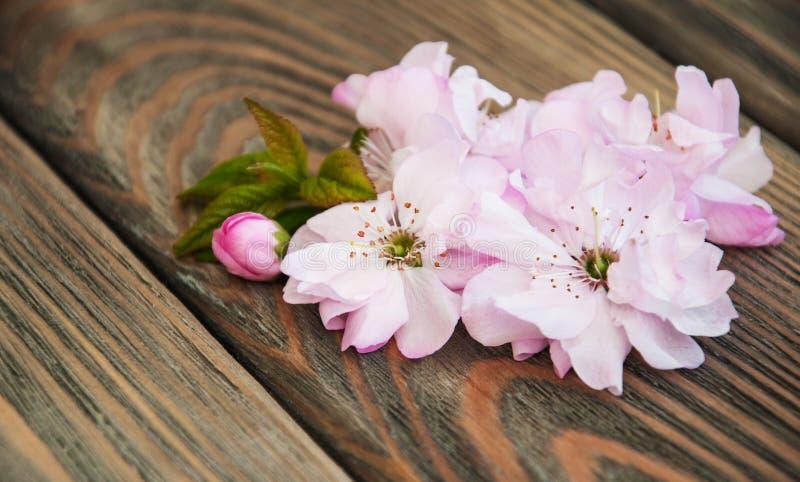 Sakura Blossom fotografia de stock