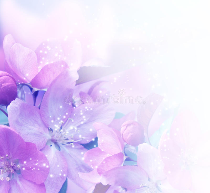 Sakura Blossom imagens de stock