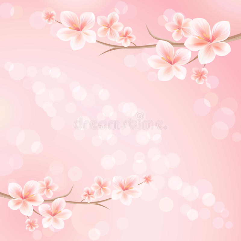 Sakura blossoms. Branch of sakura with flowers. Cherry blossom branch on pink color. Vector vector illustration