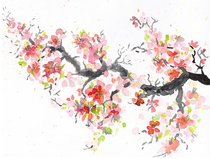 sakura branch with blooming Japanese cherry. watercolor illustration stock images