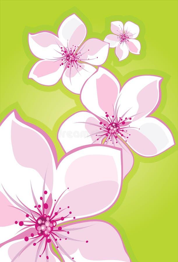 Sakura-cereza libre illustration