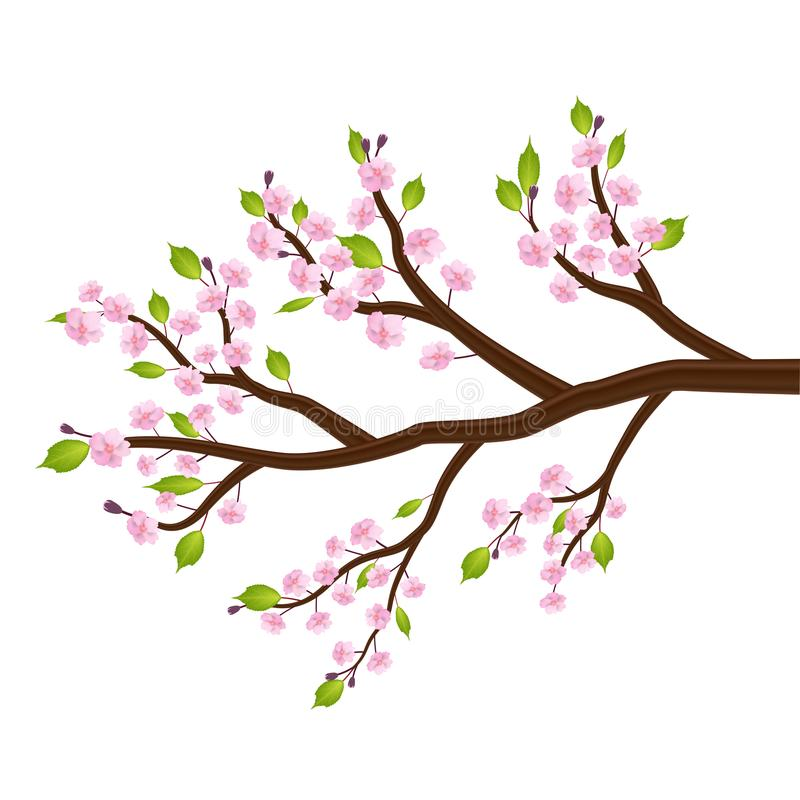 Sakura cherry blossom flower leaf tree branch royalty free illustration