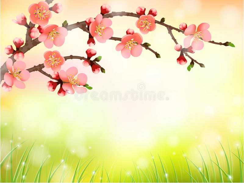 Sakura, cherry blossom in morning light. Pattern background stock illustration