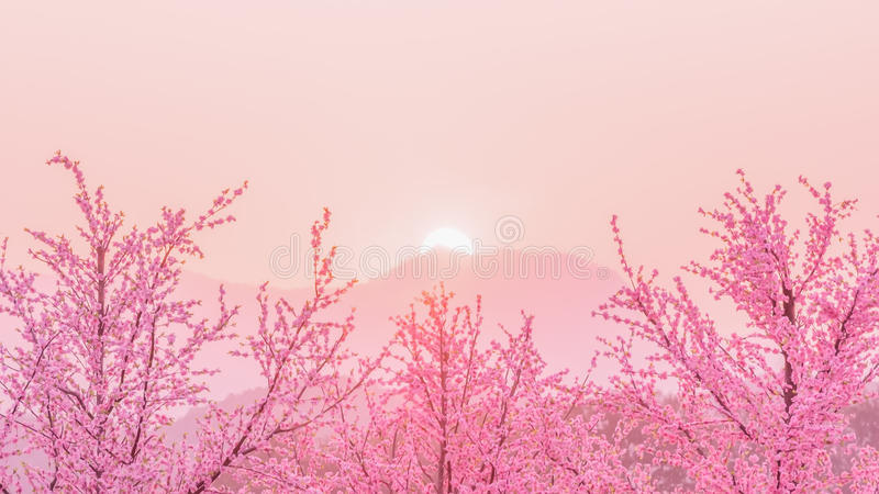 Sakura Cherry Blossom tree before sunset behiind the mountain ,. Japan royalty free stock photography