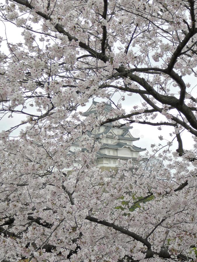 Sakura (cherry blossoms) in the background Himeji Castle stock photos