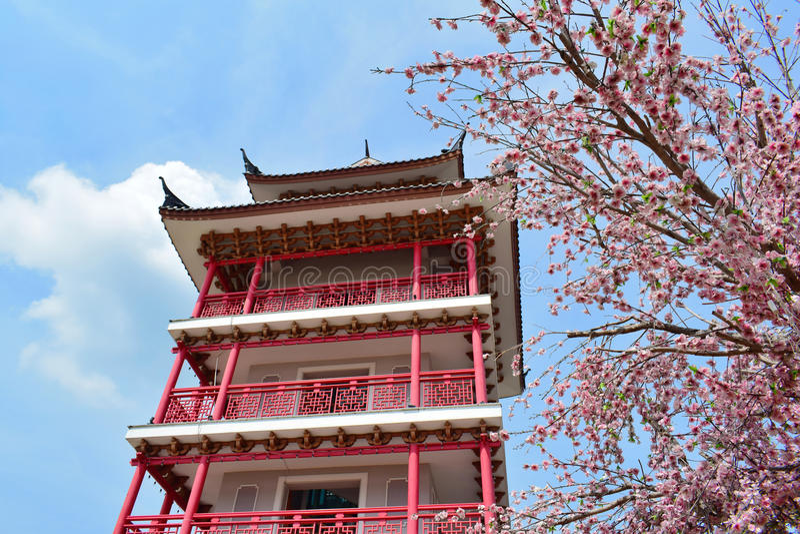 Sakura con la torre fotografía de archivo libre de regalías