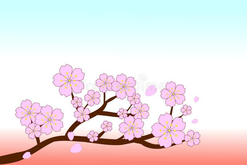 Sakura cor-de-rosa bonito floresce em ramos marrons com cópia-espaço na parte superior Ilustração do vetor ilustração do vetor