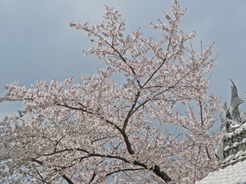 Sakura dans le château de Himeji photographie stock libre de droits