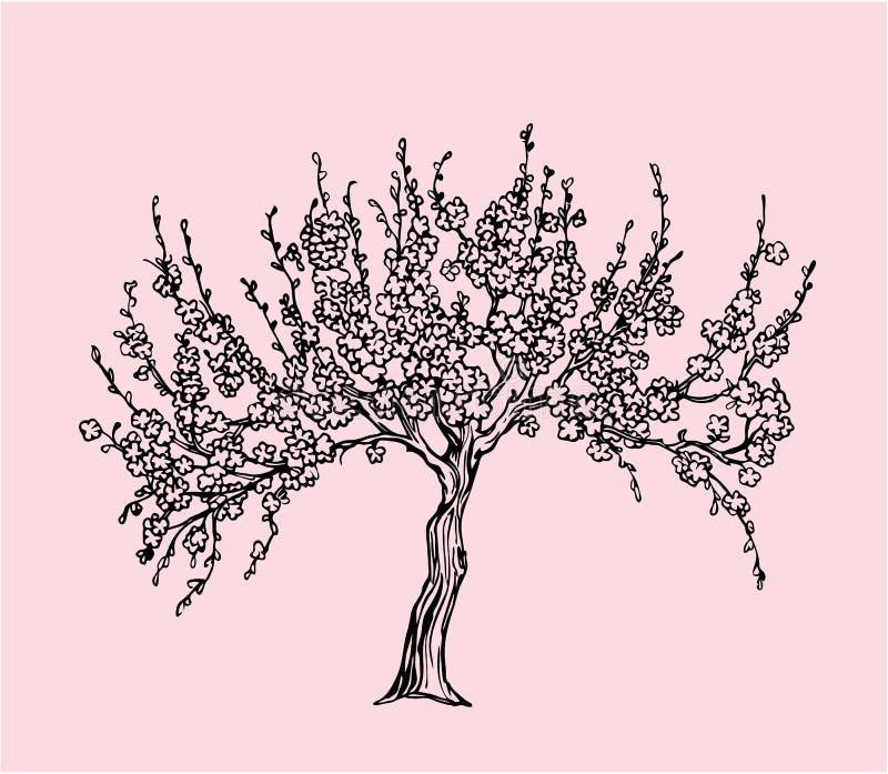 Sakura disegnato a mano con il fiore royalty illustrazione gratis
