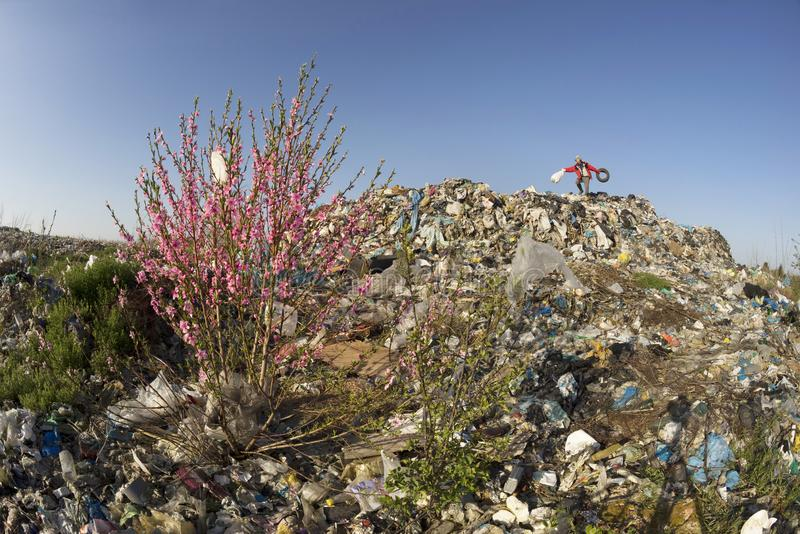 Sakura en de aaseterman stock fotografie