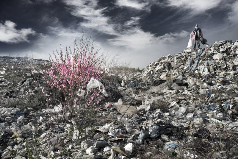 Sakura en de aaseterman stock foto's