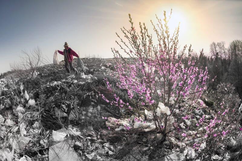 Sakura en de aaseterman royalty-vrije stock afbeeldingen