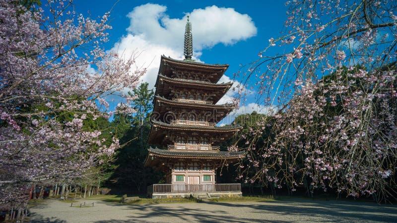 Sakura en Kyoto, Japón foto de archivo