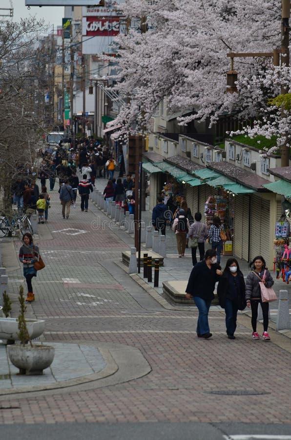 Download Sakura en Nara fotografía editorial. Imagen de botánico - 42430332