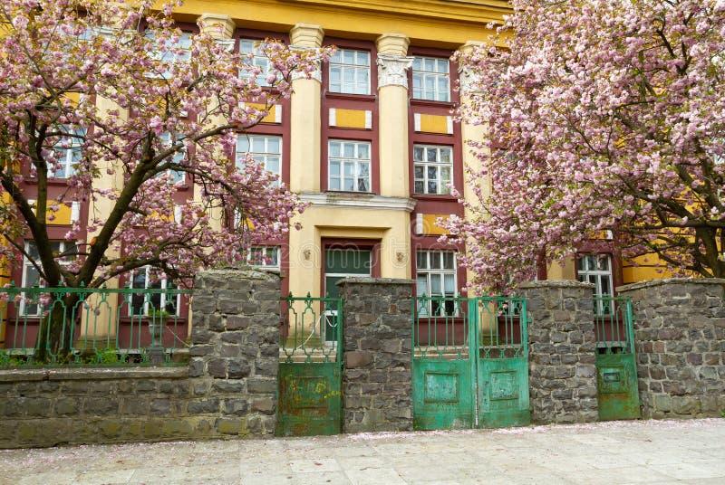 Sakura en sangre en Uzhgorod imágenes de archivo libres de regalías