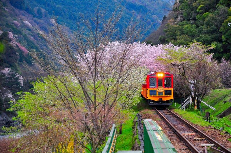 Sakura est tout autour images stock