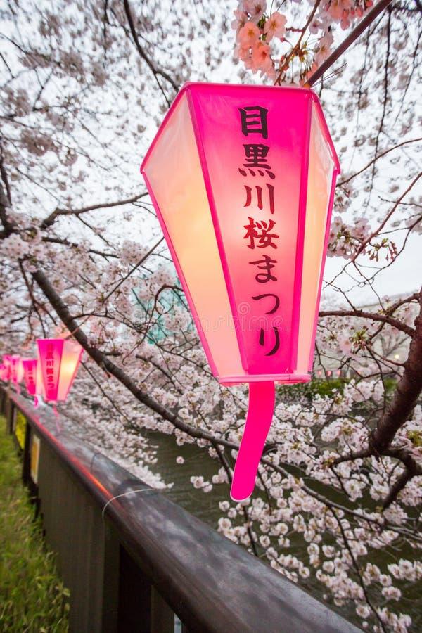 Sakura Festival-Laternen in Meguro-Fluss, Tokyo, Japan im Frühjahr Nicht englische Texte bedeuten ` Meguro-Fluss-Sakura Festival- stockbild