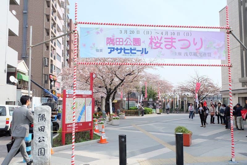 Sakura festival at Sumida Park near Sumida River royalty free stock photography