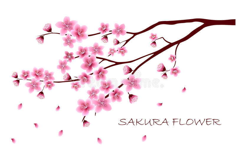 Sakura fiorisce l'illustrazione di vettore n fotografia stock
