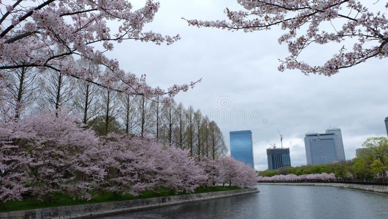 Sakura, flor de cerejeira, Osaka Castle imagem de stock royalty free
