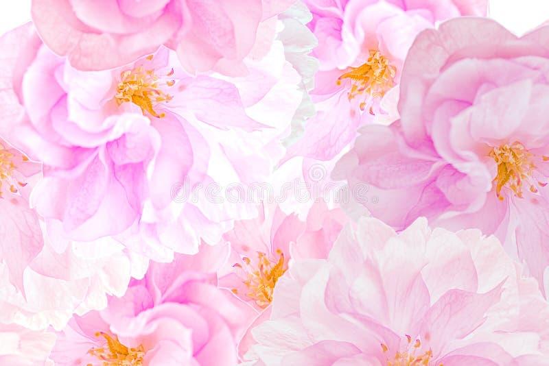 Sakura florece fondo stock de ilustración