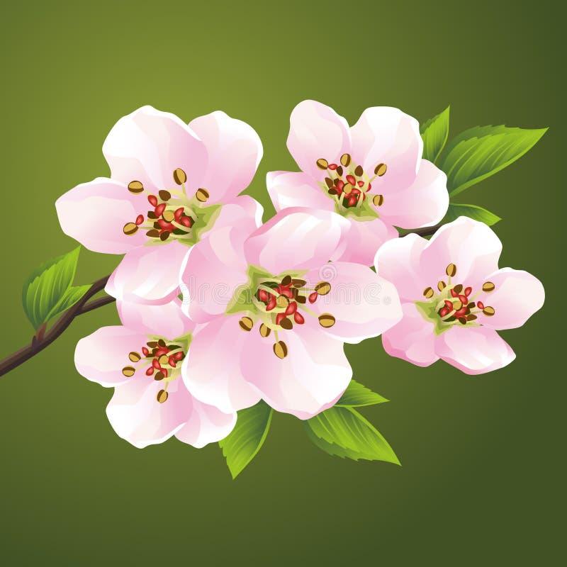 Sakura floreciente - cerezo japonés ilustración del vector