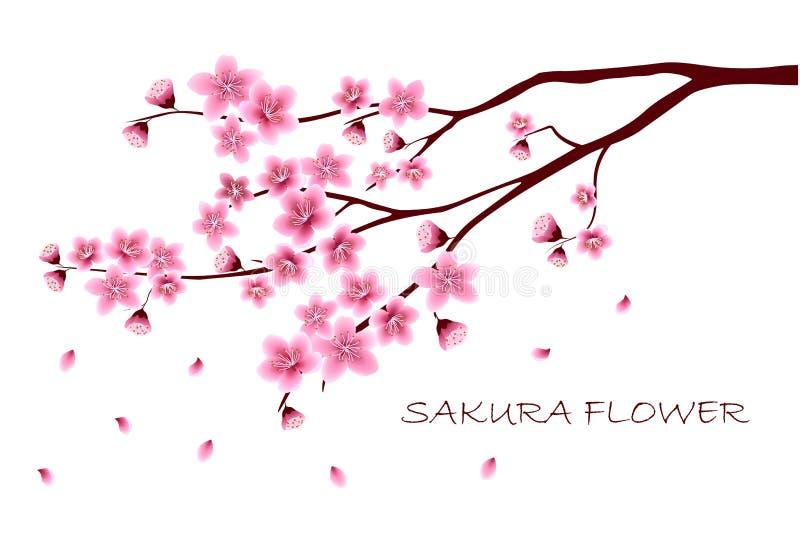 Sakura floresce a ilustração do vetor n foto de stock