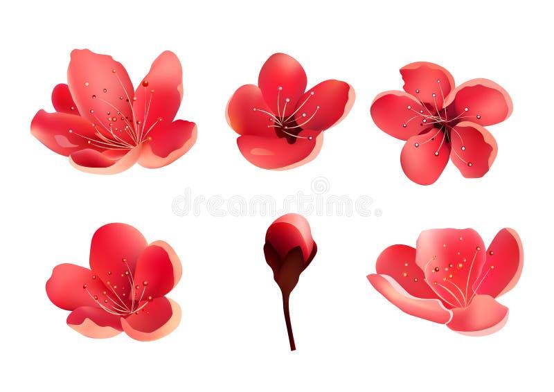 Sakura Flower Isolated Körsbärsröd Tree royaltyfri illustrationer