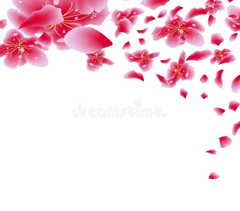 Download Sakura Flowers Background Cherry Blossom Isolated White Chinese New Year Stock Illustration
