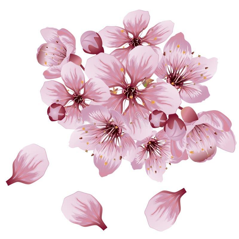 Sakura Flowers cor-de-rosa macia ilustração do vetor