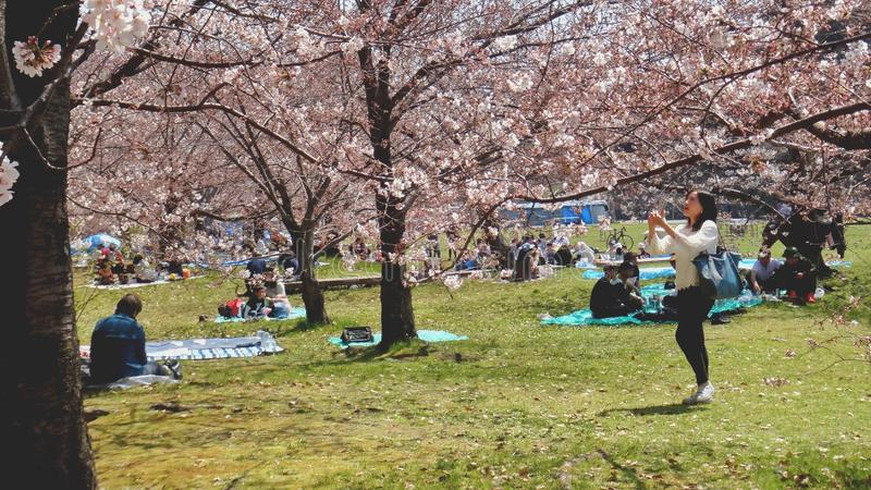 Sakura Flowers Tree e povos fotografia de stock